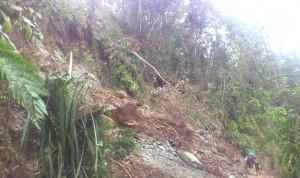 Ecology: Busay landslide