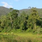 Bendum: Forest 2014